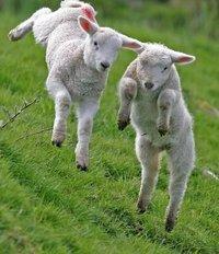 Pasen met Shepherd pantoffels