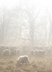 Koude temperaturen vraagt om Shepherd pantoffels